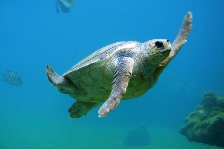 NAMRA – Reflecting on the North Australian Marine Research Alliance